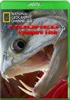 На крючке: Рыбы вампиры