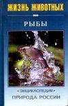 Природа России. Рыбы