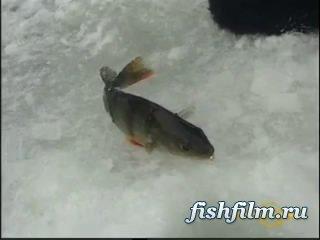 Видео Рыбалку На Окуня