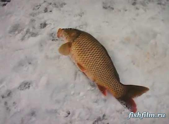 Айда на рыбалку