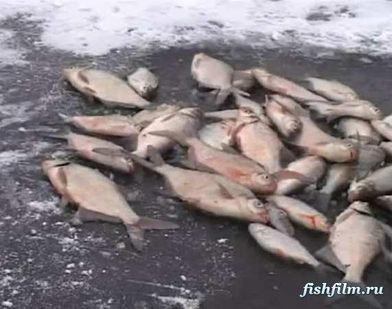 пруд сушка сиеста рыбалка